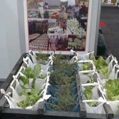 Umgibe Portable Vertical Herb-Vegetable Grower